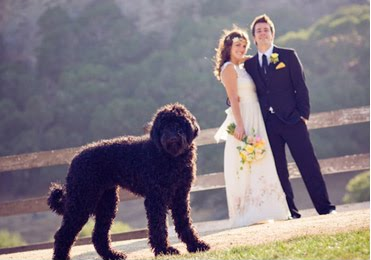 Couple at Wedding with Dog